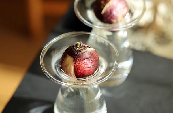 ヒヤシンスなどの球根の水耕栽培ができる、おしゃれなガラスの花瓶