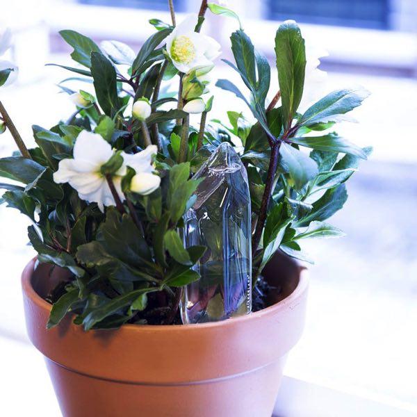 植物を水枯れから守る、吹きガラスのおしゃれな自動水やり器