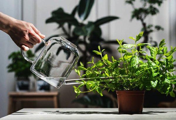 観葉植物の水やりにおすすめの、おしゃれなガラス製ジョウロ